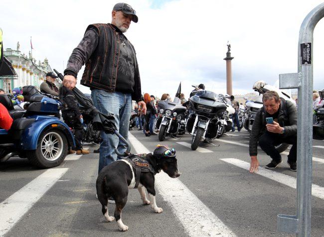 байкеры мотоциклисты фестиваль Harley Days собаки