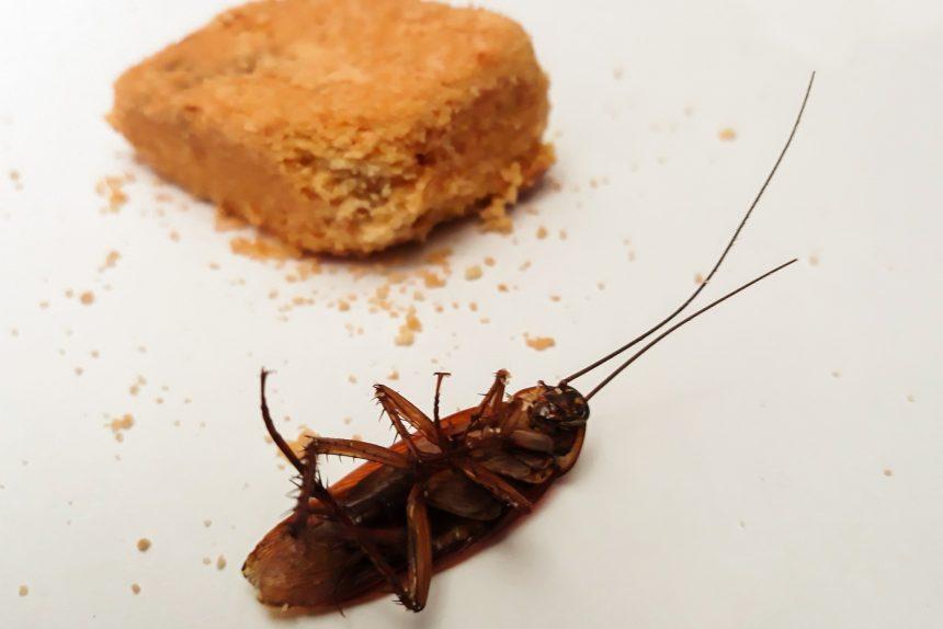 таракан насекомое вредитель отрава борьба с вредителями