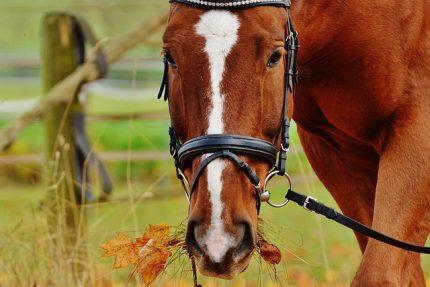 лошадь конь
