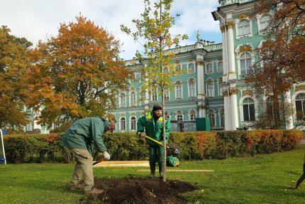 посадки деревьев зелёные насаждения