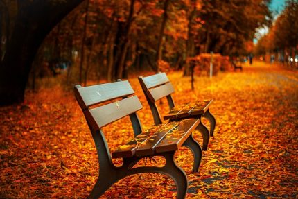 осень парк скамейка скамейки листья