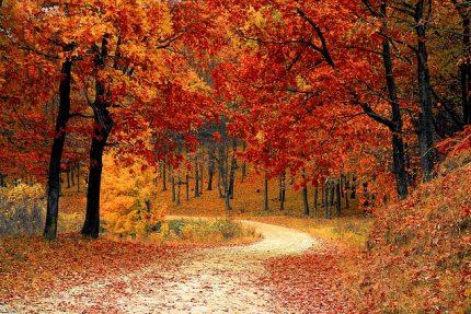 осень лес деревья листья