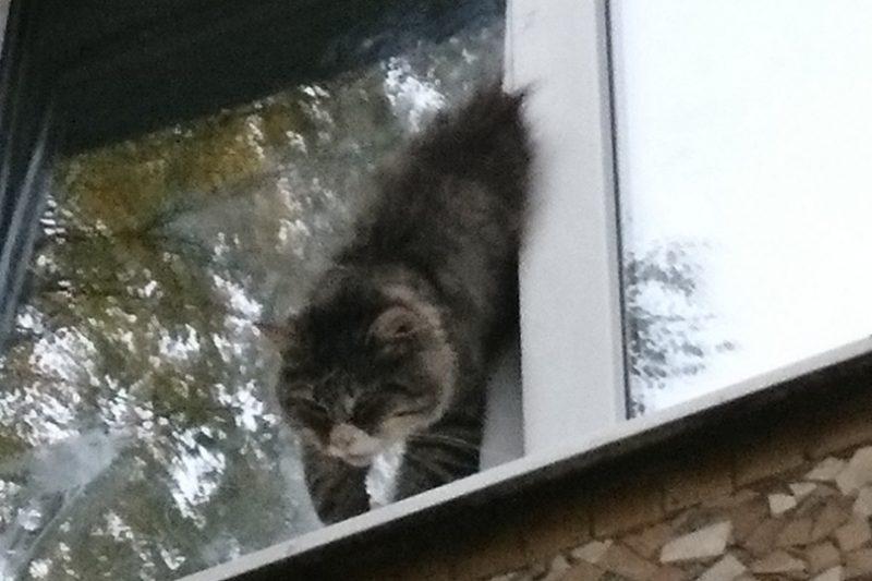 кот окно