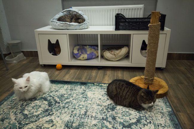 Котокафе Город кошек Кудрово