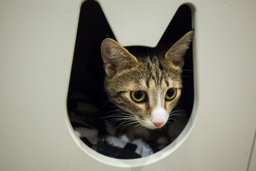 «Кошкиспас»: за 11 лет работы мы спасли почти 1,5 тысячи животных