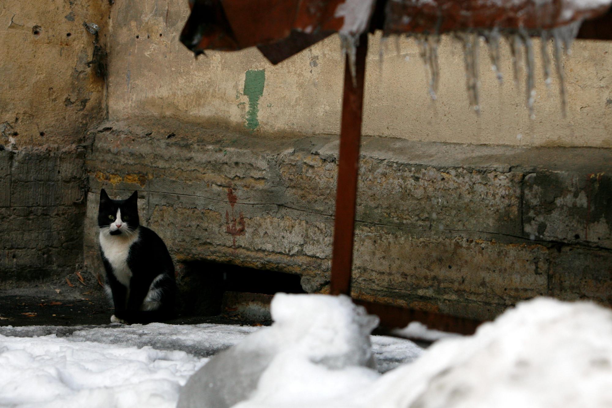 дворовые кошки бездомные животные коты
