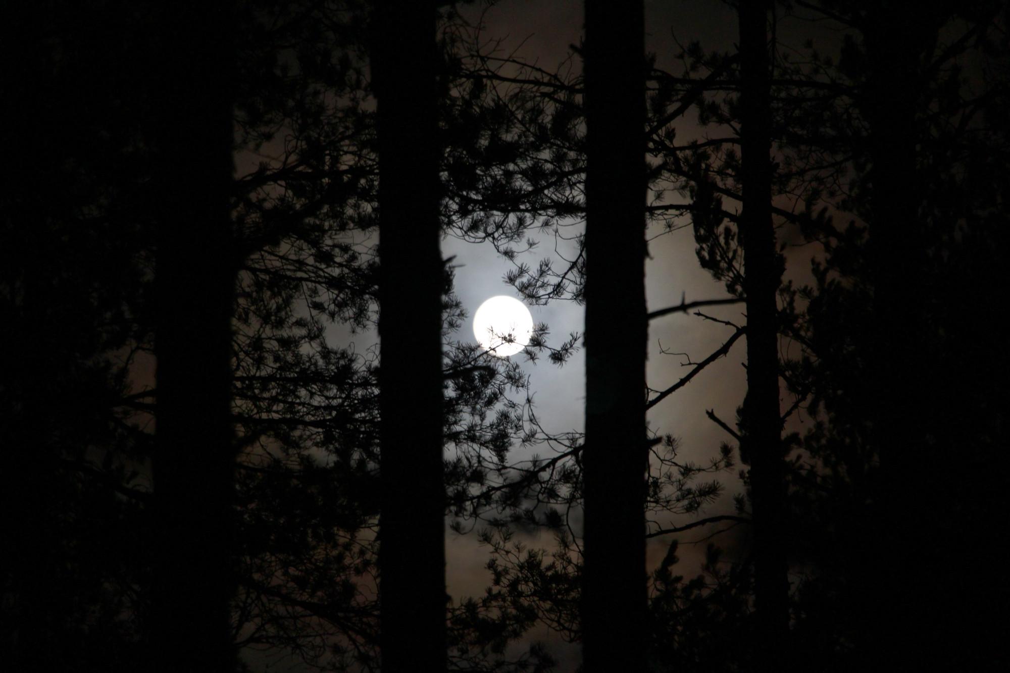 ёлки деревья лес ночь луна
