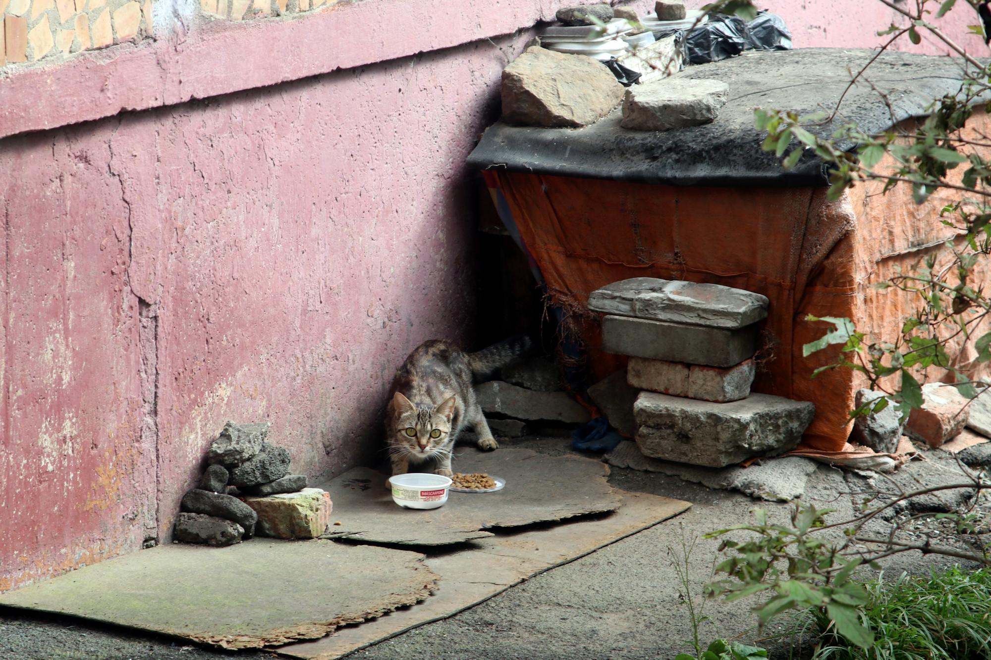 дворовые кошки бездомные животные коты кошачий домик