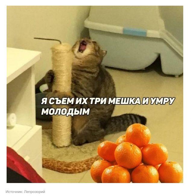 мандарин 3