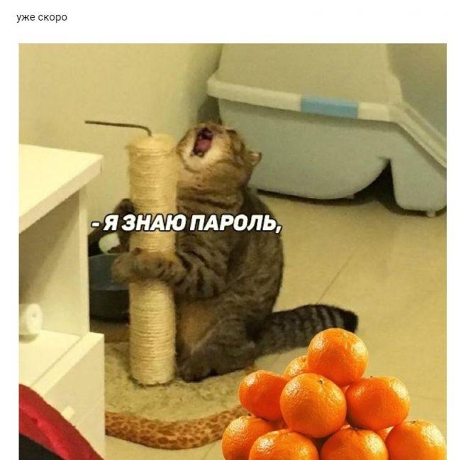 мандарин, кот, мем