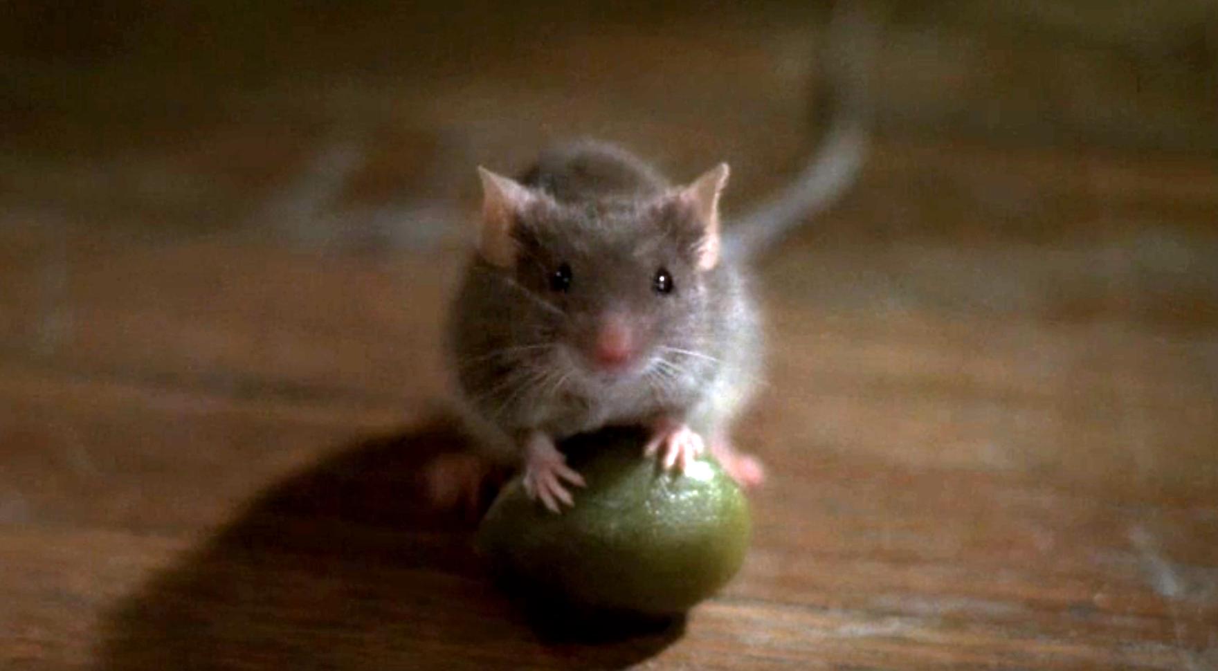 мышь, фильм Мышиная охота