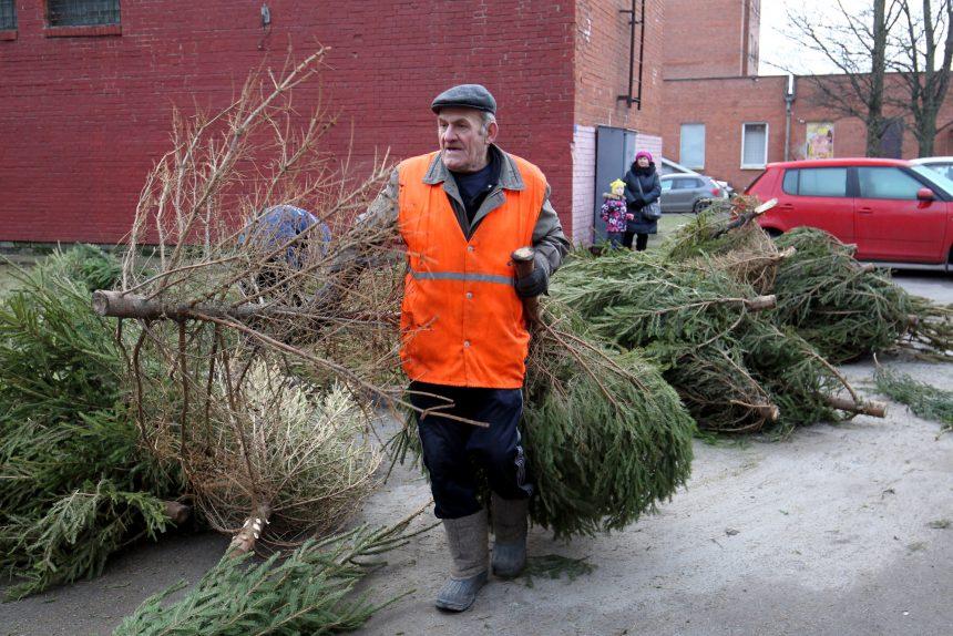 Из лесу нарядная: как заготовить новогоднюю ёлку для дома