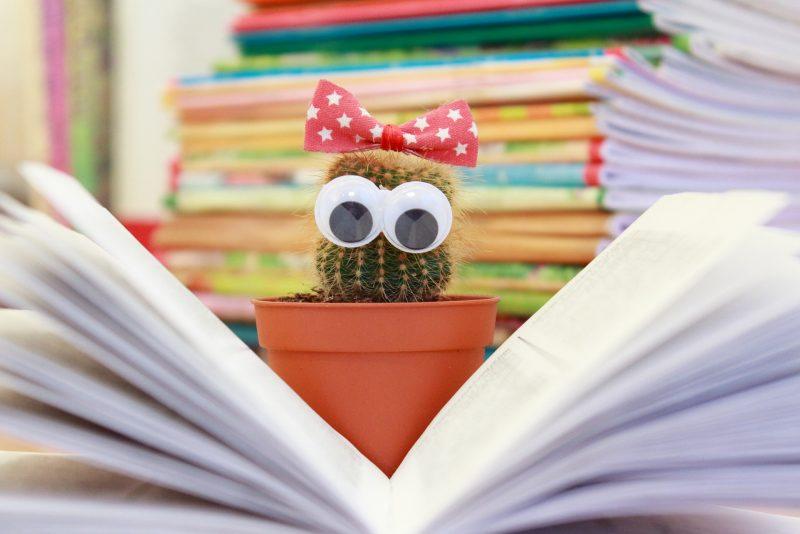учеба школа кактус чтение