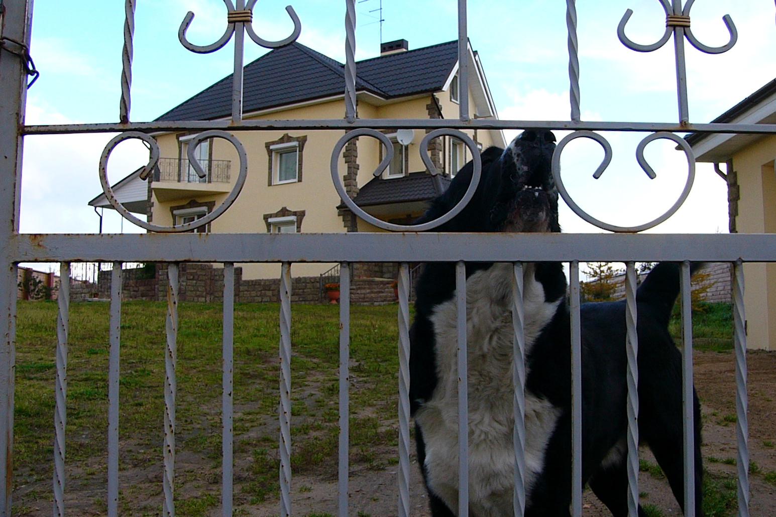 собака, ворота, дача, коттедж