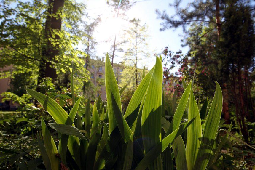 «Там был газон, похожий на пепельницу»: как петербургская певица создала цветущий сад во дворе своего дома
