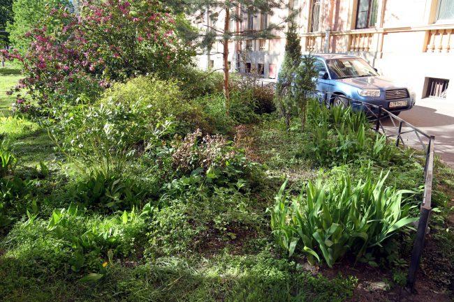 придомовой сад, улица Маринеско 6, цветы