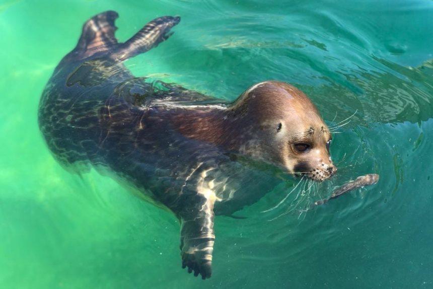 нерпа тюлень охота