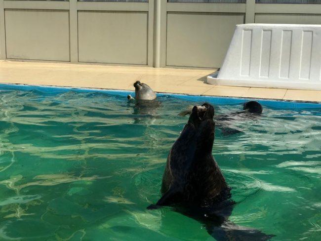 нерпа тюлень охота рыба