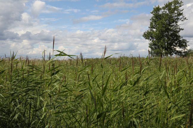 Юнтоловский заказник, ООПТ, особо охраняемая природная территория, травы, растения