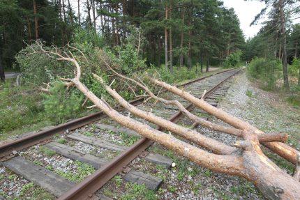 поваленное дерево, ветер, погода, упавшее дерево