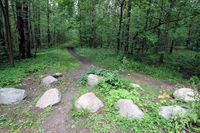 Новоорловский заказник, лесопарк, ООПТ, особо охраняемая природная территория, памятник природы