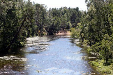 Гладышевский заказник, Чёрная речка