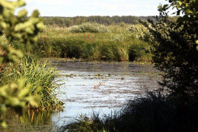 ООПТ, Заказник Сестрорецкое болото, озеро
