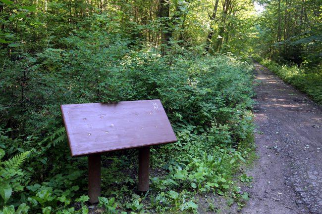 лес, ООПТ, заказник Северное побережье Невской губы
