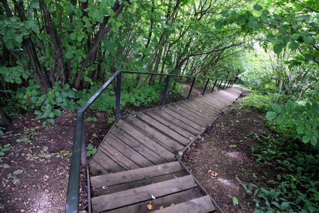 памятник природы, ООПТ, особо охраняемая природная территория, Дудергофские высоты, лестница