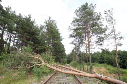 поваленное дерево, ветер, погода