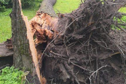 упавшее дерево, ветер, погода