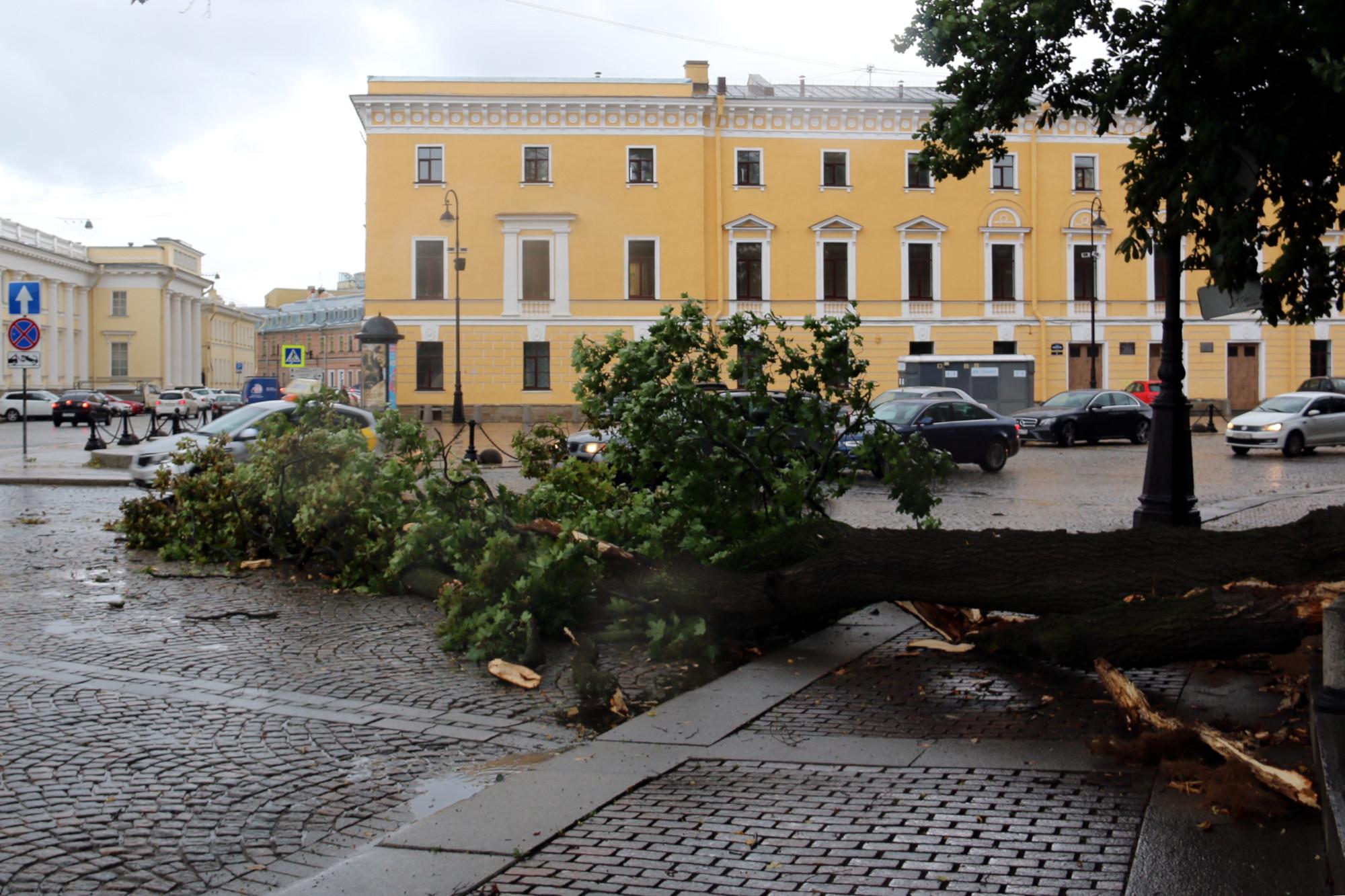 упавшее дерево, шторм, непогода, ветер, поваленное дерево, площадь Искусств