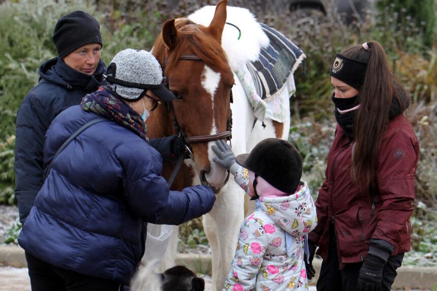 Лечение лошадьми: как обитатели конного клуба «Кентаврик» помогают в реабилитации детей