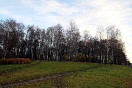 небо, погода, деревья, лес, удельный парк, осень