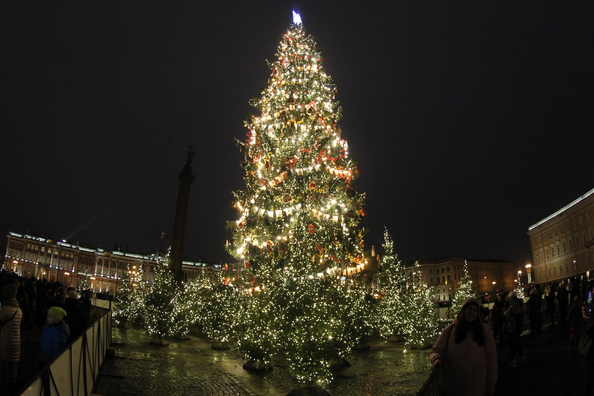 Голосование за новогоднюю ель на Дворцовой площади подходит к концу