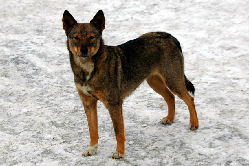 бродячая собака, бездомное животное