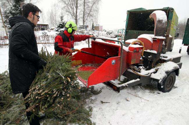 акция ёлки палки и щепа, утилизация ёлок, новогодние ели