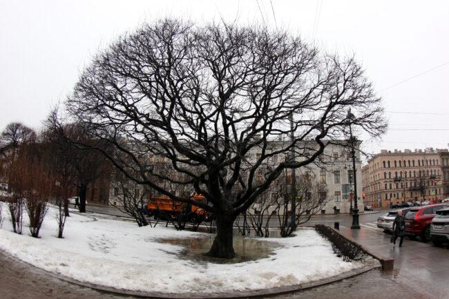 дерево, весна, снег