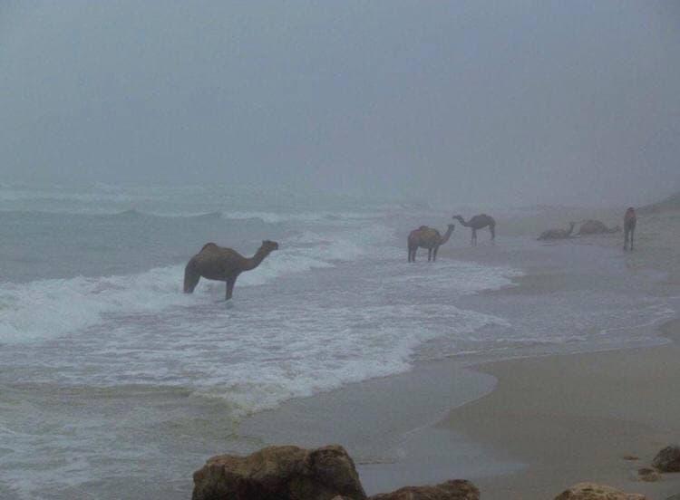 верблюды, море, спектакль Энтропия, Центр Курехина