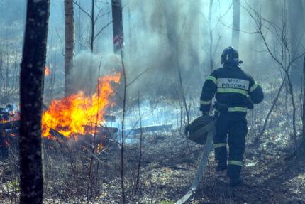 пожарные, огонь, лесной пожар