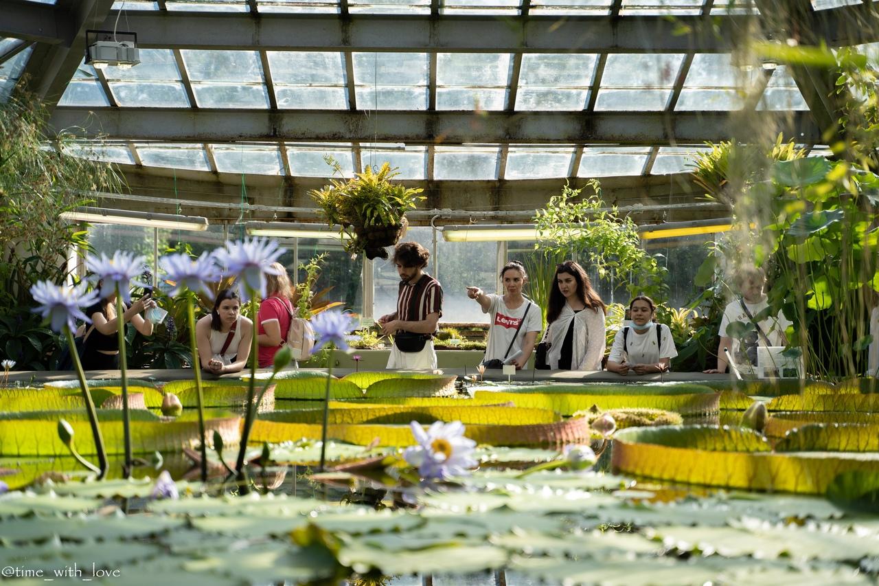 цветы, выставка мир флоксов, ботанический сад