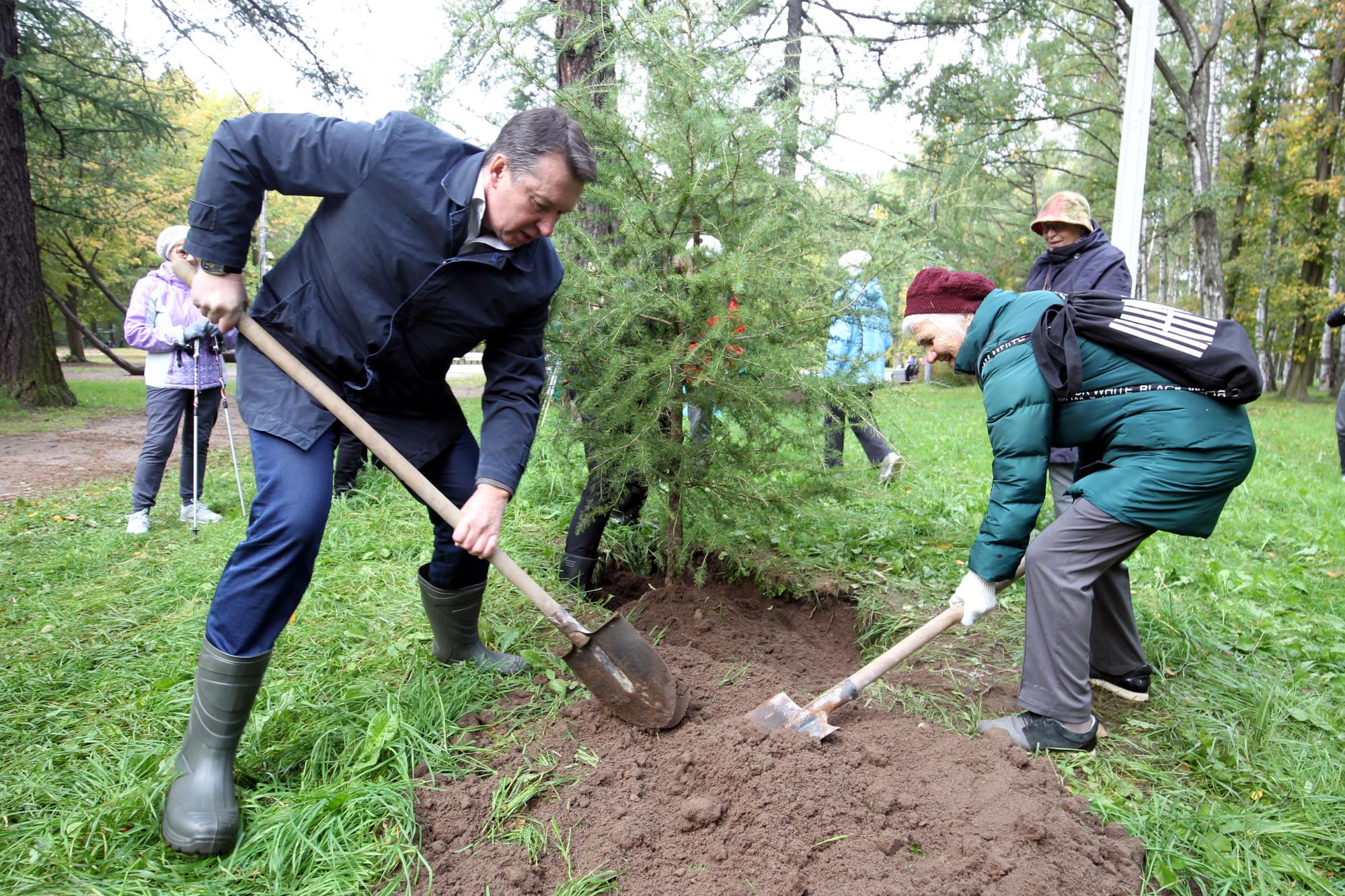 посадки деревьев, озеленение, Удельный парк