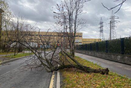 ветровал, упавшее дерево, непогода, ветер